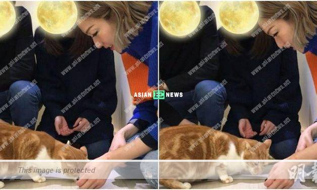 Sammi Cheng is thinking of keeping another cat as a pet