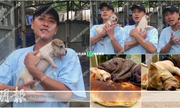 Dog lover, Bosco Wong kept a shar-pei puppy as his pet