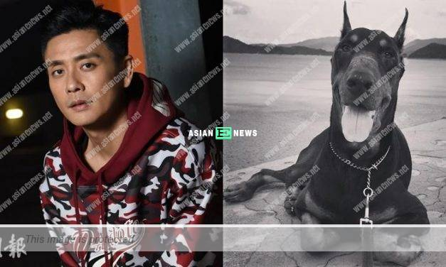 Bosco Wong's beloved dog passed away: See it in next lifetime