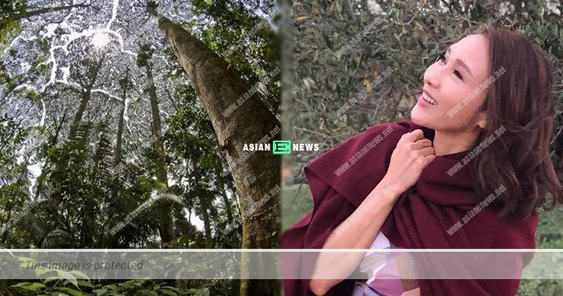 """Gigi Lai discovers the trees feel """"shy"""" upon discovering the nature"""