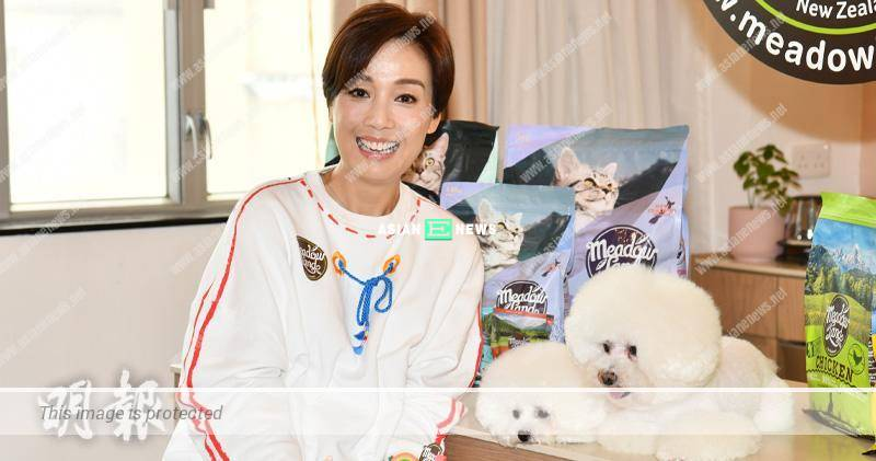 Elena Kong has a pay rise when shooting dog advertisement again