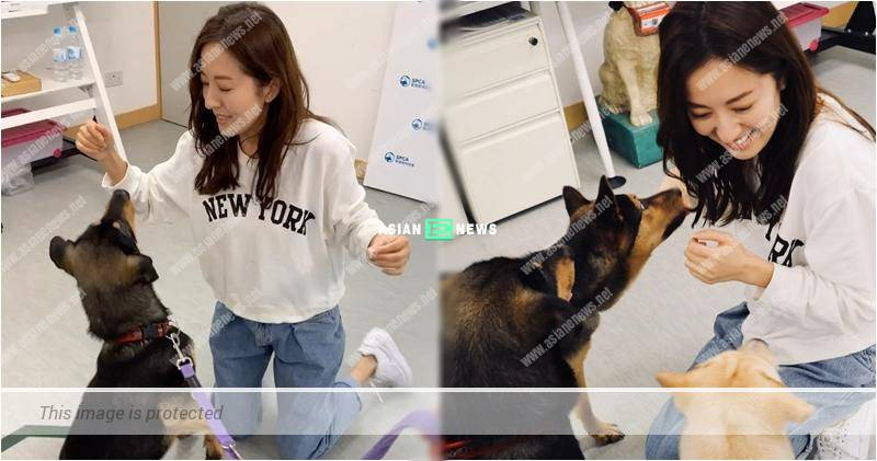 Natalie Tong urges the public to adopt the abandoned cats and dogs