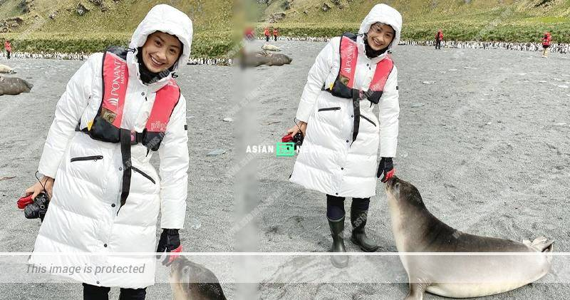 Fala Chen wants to keep baby elephant seal as a pet?