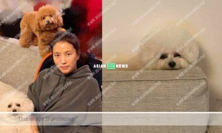 Dog lover Anita Yuen has zero tolerance towards animals abuse