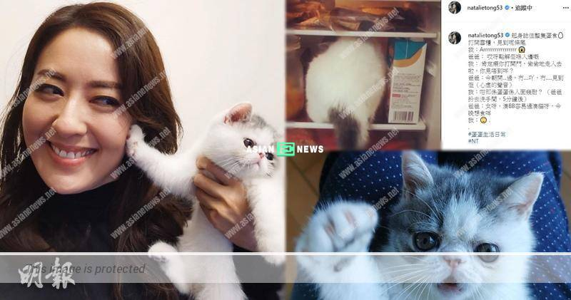 Natalie Tong's dad felt guilty when her cat was in the refrigerator