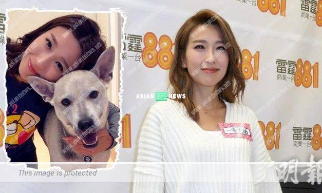 Of Greed and Ants drama: Elaine Yiu chose to watch the finale with her dog at home