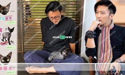 Nicholas Tse created WhatsApp stickers for his beloved cat, Miso