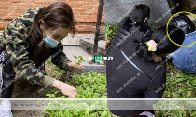 Angelababy feels proud to eat vegetables planted by herself personally