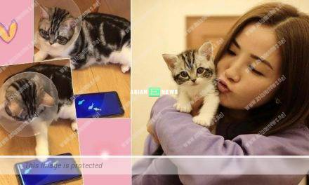 Charlene Choi takes its beloved cat for sterilisation surgery