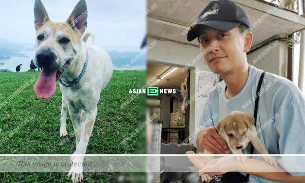 Bosco Wong adopts a puppy and takes it for hiking
