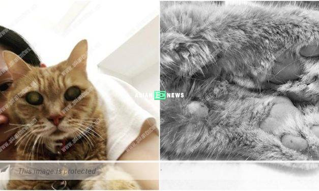 Sonija Kwok's cat passed away: A piece of my heart is missing