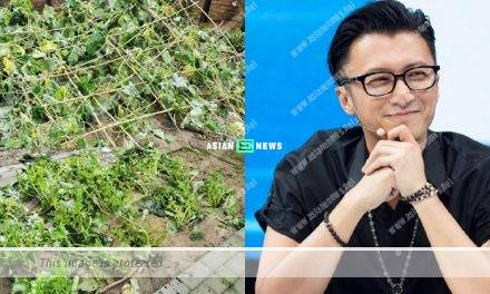 Nicholas Tse feels upset when his vegetables garden is destroyed
