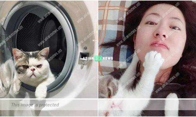 Natalie Tong's beloved cat loves to sleep inside laundry machine