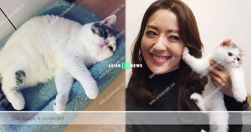 Natalie Tong's cat looks old as it is overweight?