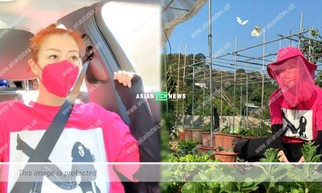 """Sammi Cheng becomes a """"farmer"""" and has butterflies accompanying her"""