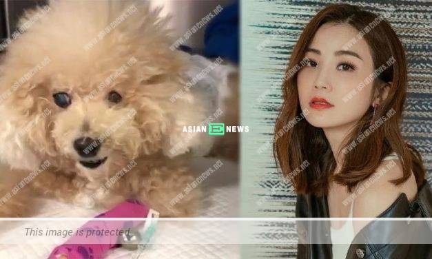 Charlene Choi feels relieved to see her dog's condition is improving