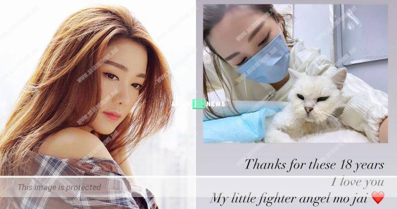 Roxanne Tong's beloved cat passed away due to an illness
